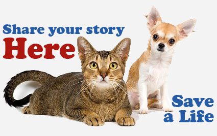 Pets For Adoption Success Stories Sponsored Organizations Ways to Help