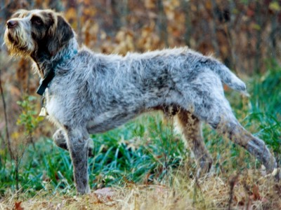 spinoneitaliano